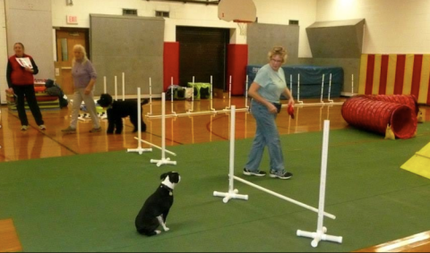 Swatch waits for instruction, agility class, fall 2013.
